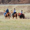 Come Horse around  at Foxwoode Farms!