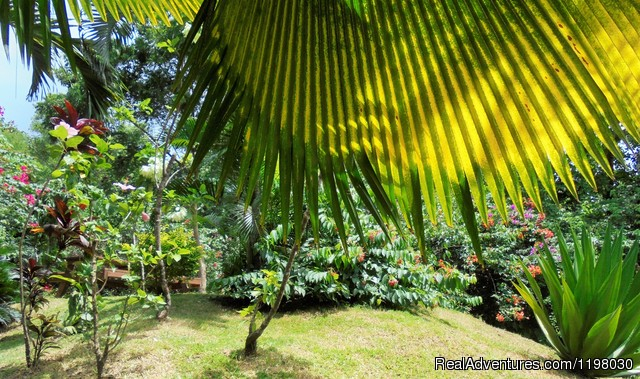 Mango Beach Garden - Mango Beach Inn, Adventure Lodge