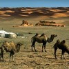 Nomadic Culture tours & Adventure, Hunting tour