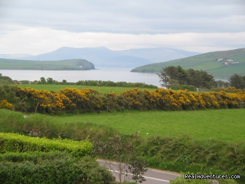 - Overlooking dingle bay and mount brandon