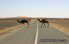 Image #4/5 |  camel trekking and tours to the desert of Morocco