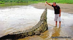 Crocodiles On The Tarcoles River With Bill Beard's Central Pacific, Costa Rica Articles