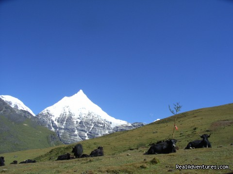 Mountain Jichu Drakye - Authentic Bhutan Tours