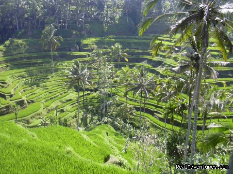 Image #5 of 8 - Bali private driver customized tour