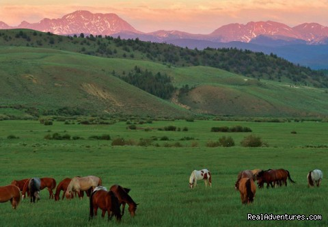 C Lazy U Ranch... Colorado's Premier Guest Ranch Summer Horses
