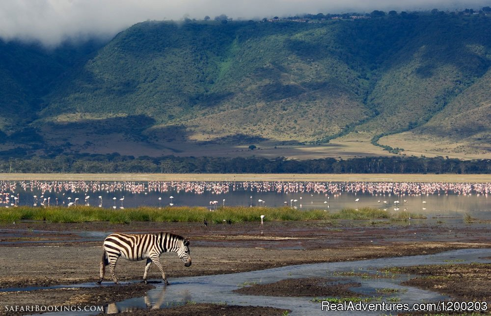 Ngorongoro crater in Tanzania | Image #6/26 | Welcome to East Africa - Land of  Beauty: