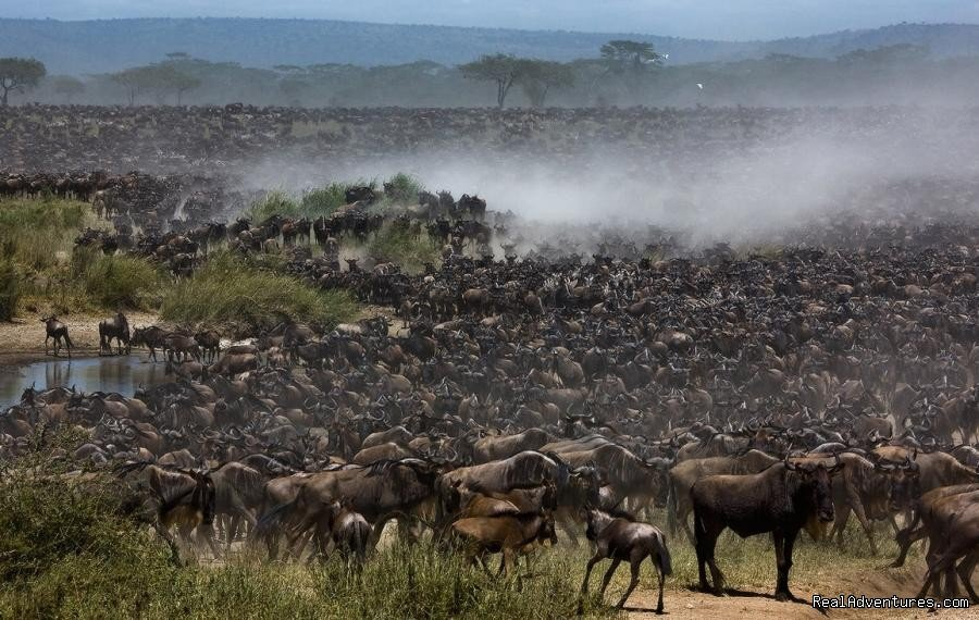 Wildebeest Migration taking place in Masai Mara 2017 | Image #11/26 | Welcome to East Africa - Land of  Beauty: