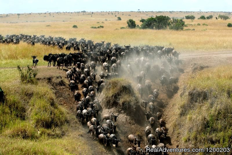 Wilbeest Migration in Masai mara 2017 | Image #12/26 | Welcome to East Africa - Land of  Beauty: