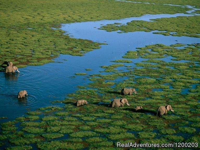 Amboseli National Park | Image #15/26 | Welcome to East Africa - Land of  Beauty: