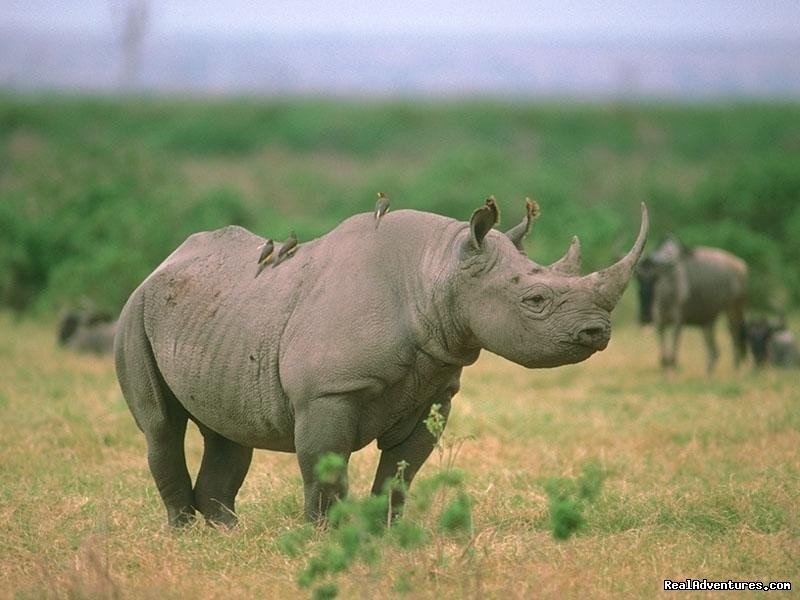 Black Rhino | Image #17/26 | Welcome to East Africa - Land of  Beauty: