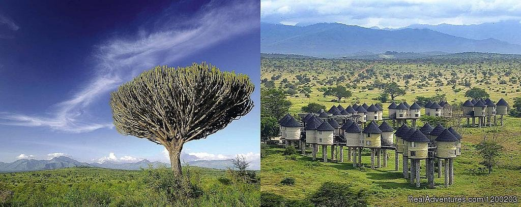 Salt Lick Game Reserve/ Taita Hills | Image #23/26 | Welcome to East Africa - Land of  Beauty: