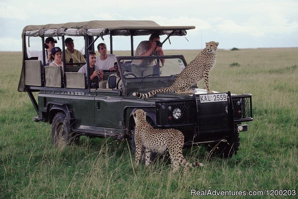 Guests Enjoying their Game drive in Masai Mara | Image #25/26 | Welcome to East Africa - Land of  Beauty: