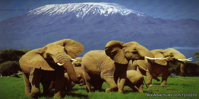 Amboseli National Park - Welcome to East Africa - Land of  Beauty: