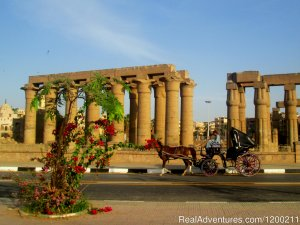Habibitours Cairo, Egypt Sight-Seeing Tours