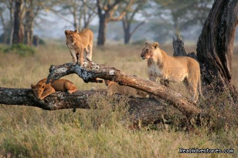 Nature: wildlife safaris: wildlife safari