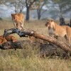 Nature: wildlife safaris Dar-es-Salaam, Tanzania Wildlife & Safari Tours