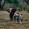 Nature: wildlife safaris