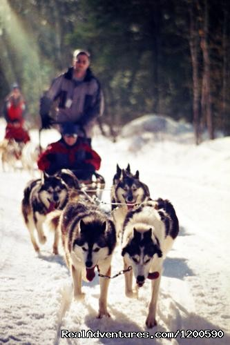 Dog Sledding - Wilderness canoe trips in Algonquin Park