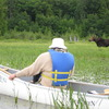 Watch moose graze from the comfort of your canoe