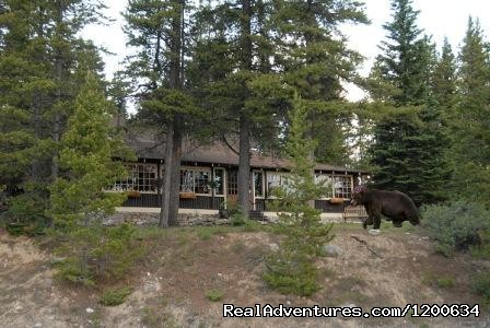 Our 'other' Guests - Storm Mountain Lodge and Cabins