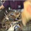 Washington DC Fish Market , United States Videos