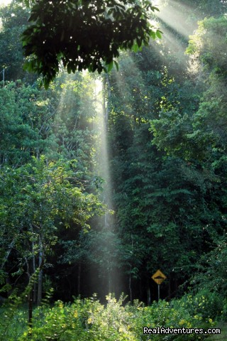 Morning rays - Tabin Wildlife Reserve Safari
