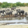 African Safari & Site seeing