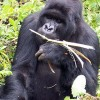 Lets Go Travel  - Great deals on Adventure Kampala, Uganda Wildlife & Safari Tours