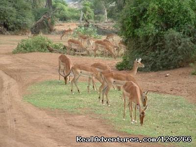 Masai Mara special