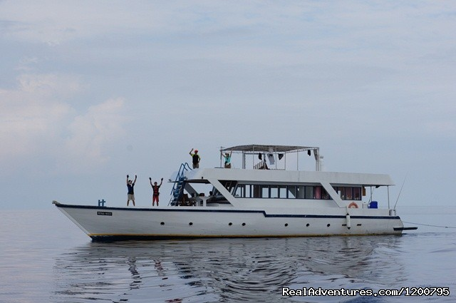 Dolphin safari Boat . - Maldives Trips - Fishing, Surfing, & Scuba Diving