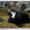 Trekking Minya Gongga - King of Sichuan Mount tour