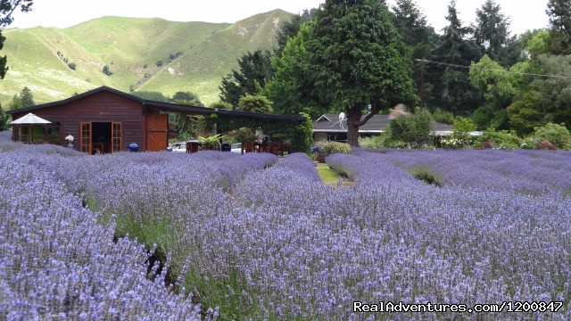 The Lavender Farm (#8 of 8) - Canoe Hire And Jet Boat Tours Taumarunui
