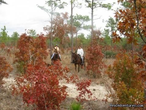Fall Leaves - Romantic Horseback Riding Getaways
