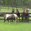 Some Of Our Wonderful Horses