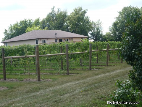 stroll through the vineyard - InnSpiration Bed & Breakfast- A Country Getaway