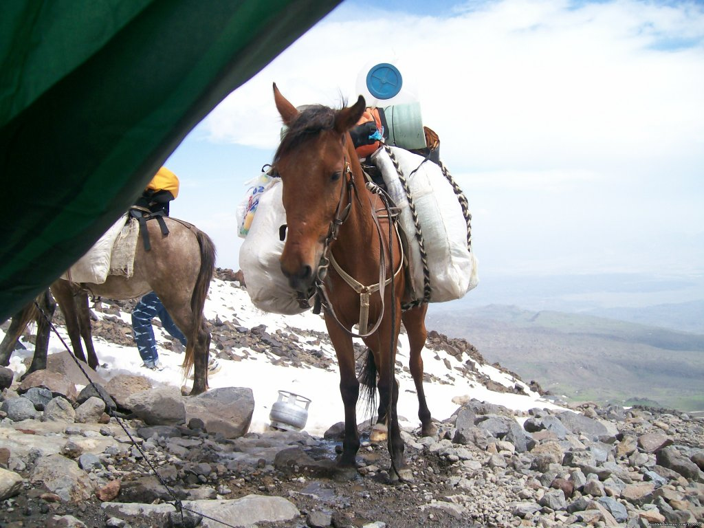 Camp 2 | Image #14/16 | Trekking Ararat,Ararat Expedition,Ararat Ski tours