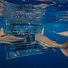 Shark Cage Diving KZN Cage Dive KZN
