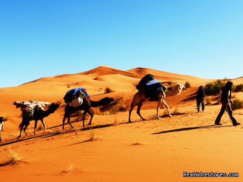 Magic carpet/ family vaccations - Travel agent/ adventure- culture trips to Morocco