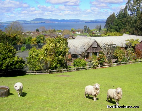 A Panoramic Country Homestay Bed & Breakfasts Rotorua., New Zealand