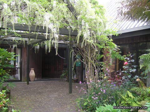 Pergola with wisteria climber - A Panoramic Country Homestay