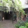 Pergola with wisteria climber