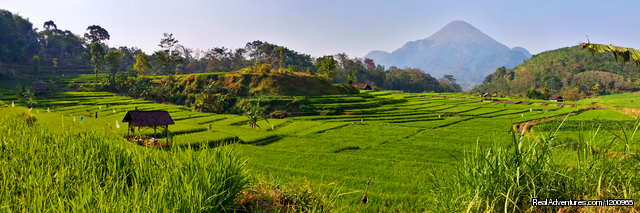Rice Terrace near the Hotel - Vanda Gardenia Trawas