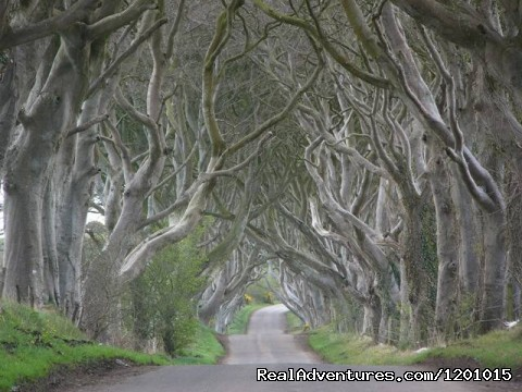 The dark hedges - Cullentra House