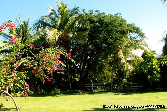 Le Bistro Restaurant, Tropical garden surrounding Restaurant (#3 of 13) - Le Bistro French Restaurant