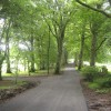 300 yr old beech tree driveway