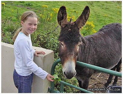 Our Donkey - Torann Na Dtonn