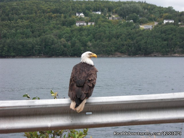 Wildlife abounds - Cycle the Cabot Trail with Freewheeling Adventures