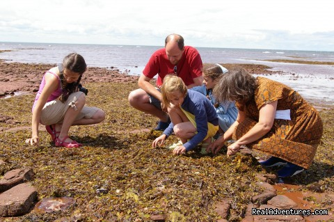Seaweed Secrets - Experience PEI-unique hands-on learning adventures