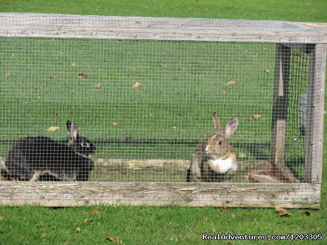 Our Bunnies - Millstream Cottages and Motel
