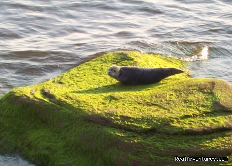 The shy seal that likes to sun on the rocks - Oceanfront  Desired Haven Cottages
